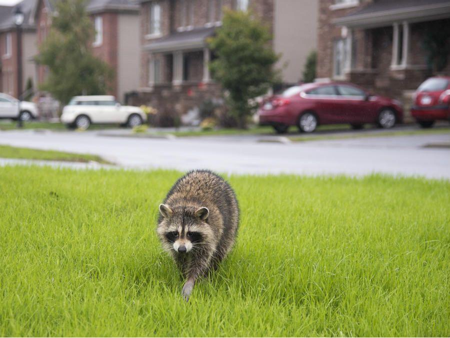 Surveillance des animaux