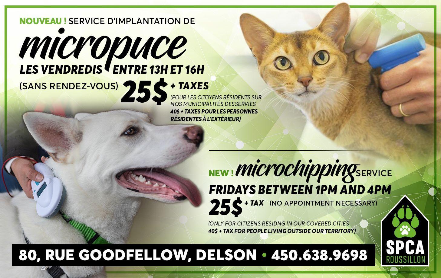 Micropuçage pour animaux